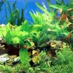Rong biển – Du lịch ẩm thực Sầm Sơn
