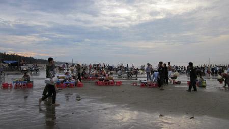 Chợ hải sản ăn liền trên biển đặc biệt ở Sầm Sơn